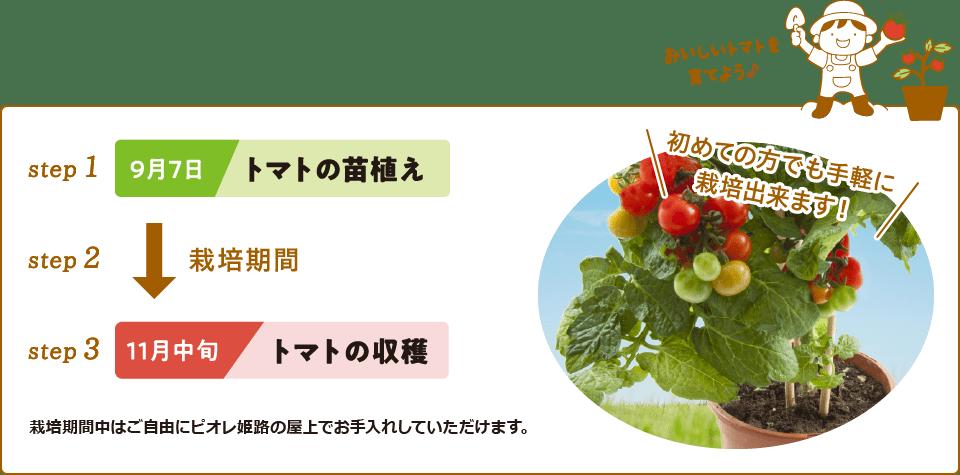 おいしいお芋を育てよう♪【step1】5月中旬 サツマイモの苗植え【step2】栽培期間【step3】10月 サツマイモの収穫●袋栽培だから初めての方でも手軽に栽培できます!●栽培期間中はご自由にピオレ姫路の屋上でお手入れをしていただけます。※日々のメンテナンスはピオレ姫路でも行います。
